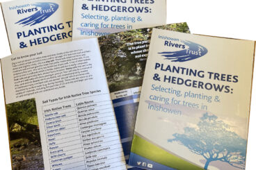Guide to Tree Planting