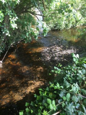 Dappled shade on a river