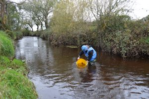 Releasing fish into river after survey.