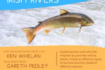 Fish Migration Patterns in Irish Rivers